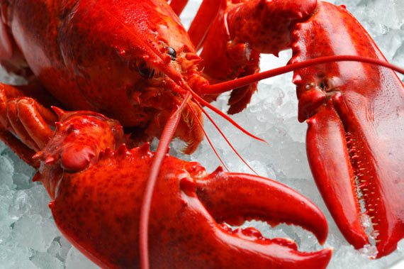 Ways to cook Lobster